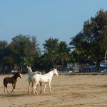 Horses in front of Cuba Agonda