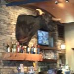Bar (and Bull)