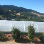 Chalets @ Terraced Gardens Foto