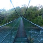 Hanging bridge leading into the forest in Tirimina Lodge