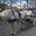 Loved every minute of this carriage ride! The guy was very informative & friendly! Great memorie