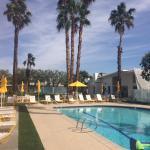Zdjęcie The Monkey Tree Hotel