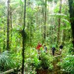 Hike trough the jungle