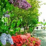 Odori Park Photo