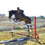 Curium offers excellent hacking and showjumping opportunities