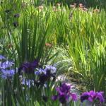 Briarwood - The Caroline Dormon Nature Preserve