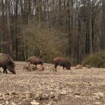 Wildpark Eichert