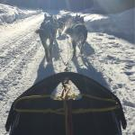 Sirius Sled Dogs - Day Tours Foto