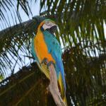 Paradise Island Resort & Spa Resmi