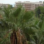 Foto de Golden Avenida Suites