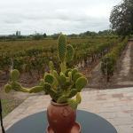 Gracias Via Rent a Car,  Astrid y Patrick por confiarnos su visita en Mendoza.  #WineTours  Cont