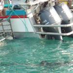 Dyer Island Cruises Foto