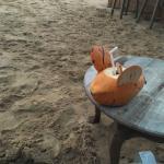 Thambili Cafe Foto