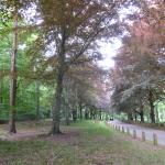 Brandon Country Park