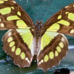 Foto de Greentique Costa Rica Tours