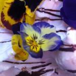 limone profumato alla lavanda con violette bio