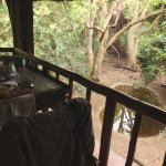 Foto de Moholoholo Forest Camp