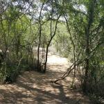 Foto de The Wild Olive Tree Camp