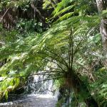 Photo de Forest Edge Nature-lovers' Retreat
