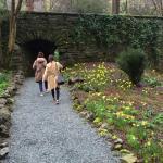 Walk amongst the daffodils