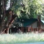 Limpopo Forest Tented Camp Photo