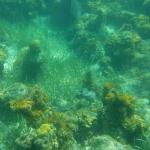 Photo de Undersea Explorer