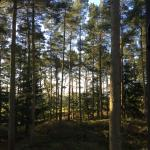 Center Parcs Whinfell Forest Photo