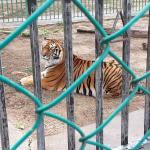 El Tigre: behind 17th tee