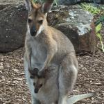 Wallaby Ridge Retreat-billede
