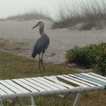 Beautiful place. Great blue heron on a regular basis