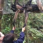 Fundacion Los Monos Selva y Vida