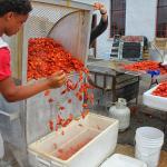 Crayfish up!