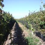 Uruguay wine tour
