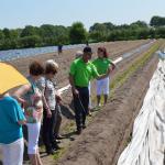 Rondleiding over de aspergevelden