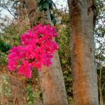 Photo de The Dreaming Tree
