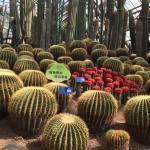 Photo de Nanshan Botanical Garden