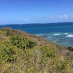 View from top of Palomino Island