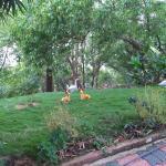 Foto di Green Magic Home