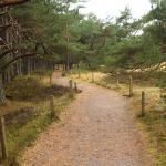 Der Kiefern-Urwald