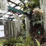 Jardin de Mascarin Demeure principale Serre des fougères