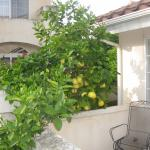 citrus tree overhanging patio at front of suite