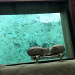 Foto de Deep Ocean Spa