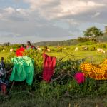 Laundry on the perimeter fence of the boma - © Charles G Young