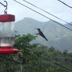 Hummingbirds are everywhere