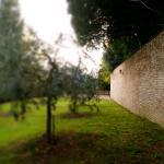 una sezione del giardino con ulivi