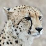 andBeyond Ngala Safari Lodge Image