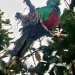 Found! Monteverde.