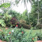 Blick in den hinteren Garten
