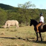 Watching rhino from horseback at Ant's Nest - photo: Sophie Neville