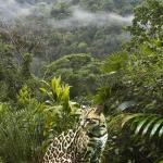 Photo of Corcovado National Park